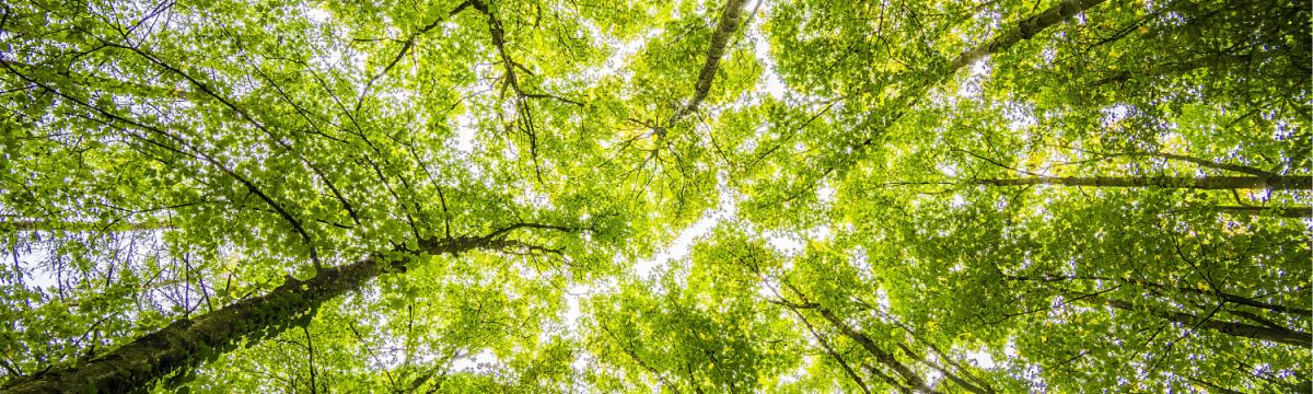 ekovilla ekologinen ecological ekovilla vihreä lämmöneriste kiertotalous